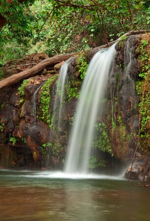 waterfall in dense forest photo