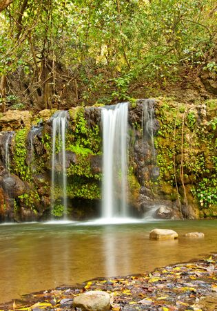 wide shot of dense forest with waterfall with three streams Stock Photo - 16877391