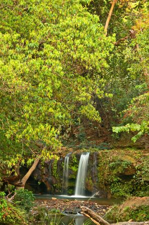 wide shot of dense forest with waterfall with three streams photo