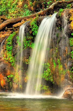 wide shot of dense forest with waterfall with three streams Stock Photo - 16877384