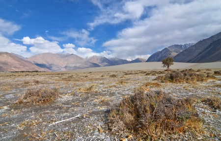 desert landscape: scene of himalayan desert landscape