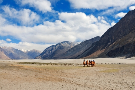 a group of camel riders in  Nubra valley  Ladakh India