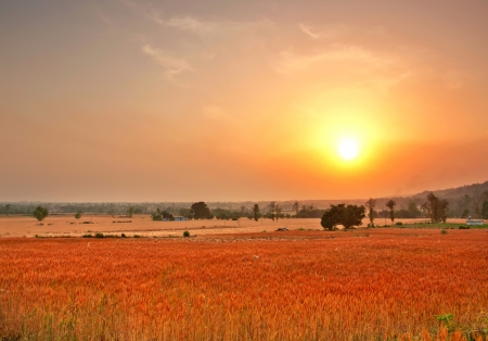 wide shot of farms with vast wheat fields Stock Photo - 17570745
