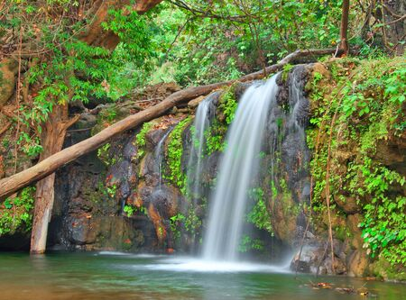 waterfall in a dense wooded forest Stock Photo - 18916231