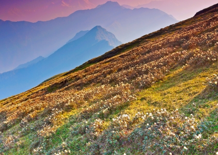 himalayan slope with bloom of Rhododenderon flowers Stock Photo