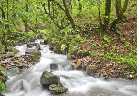 fluvial: water flowing in lush green forest Stock Photo