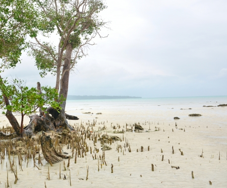 breathing roots of mangrove plant