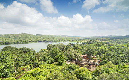 wide Aerial Aerial shot of lush green Forest of Ranthambhore national park, India