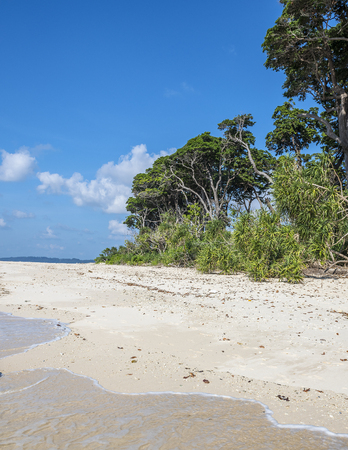 pristine corals: a patch of Forest at sea beach Stock Photo