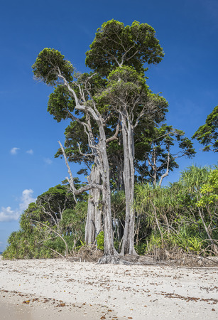 pristine corals: HIgh  trees at sea beach in laxmanpur Stock Photo