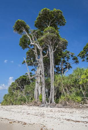 HIgh  trees at sea beach in laxmanpur Standard-Bild