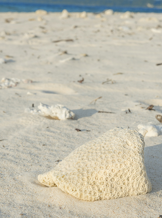 abandoned coral shell lying on a sea beach in Andaman and Nicobar island Stock Photo