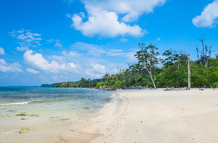 pristine corals: Elephant beach at Havelock Island, Andaman and Nicobar, India