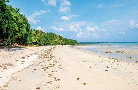 pristine corals: long stretch of sand at Vijay Nagar Beach, Andaman and Nicobar, India