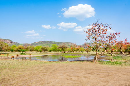 pond in the with wildlife around in Ranthambhore national Park