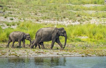 ジム Corbett の国立公園で象の家族