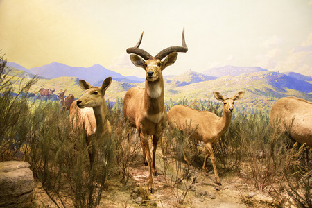 New York City, American Museum Of Natural History