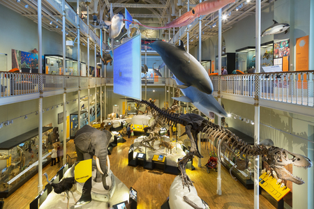 Natural World galleries, National Museum of Scotland, Edinburgh, Edinburgh, Scotland. 新聞圖片