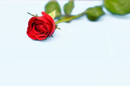 Happy Valentine's Day with rose background