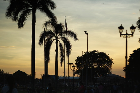 Palm trees on sunset in park, Manila, Philippines