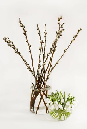 sallow: Spring still life with a bouquets of snowdrops and willow in the glass vases on a light gray background