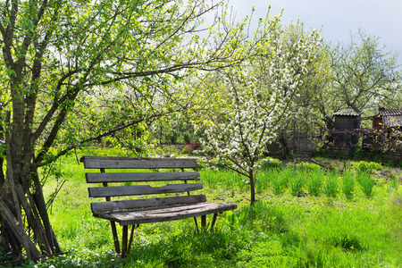 Bench in the spring garden with flowering trees