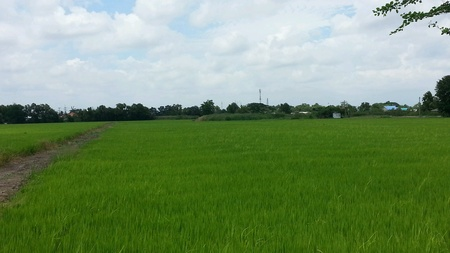 hope: Rice field in Thailand