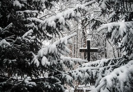 rood: Cemetery in winter