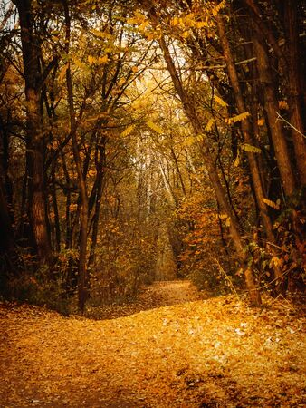 mystical forest: The path in the autumn mystical forest