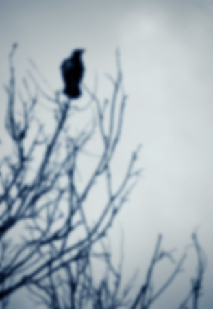 perched: Black raven perched on a tree branch; blurred background Stock Photo