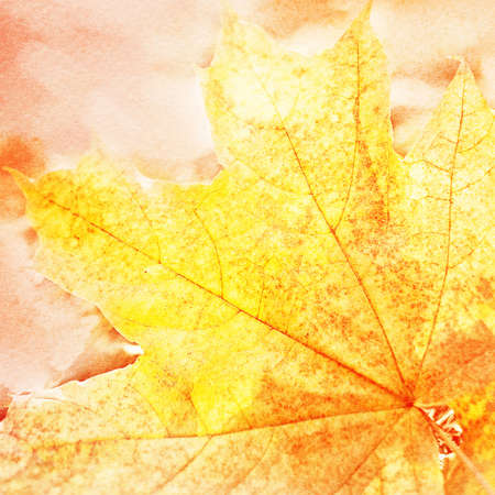 Watercolor painting styled background with yellowed maple leaf