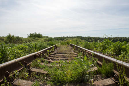 railway points: old railway disappearing into the green thicket