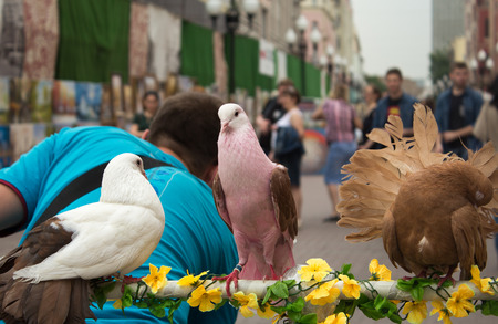 tame: Three tame pigeons sitting on a perch, attracting tourists Stock Photo