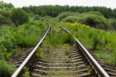 railway points: railway disappearing into the green forest