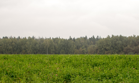 Green field with a row of trees on horizon