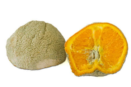 Rotten orange photo