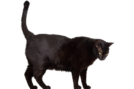 cat tail: black cat Stock Photo