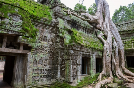 Trees in Ta Prohm, Angkor Wat photo