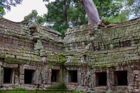 raider: Ta Prohm, Angkor Wat Stock Photo