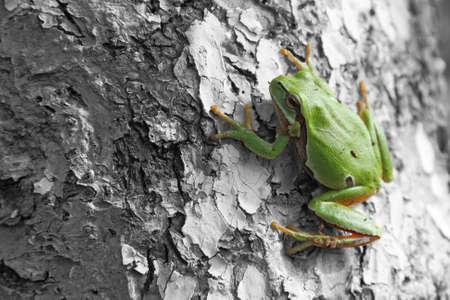 Frog Stock Photo - 16255468