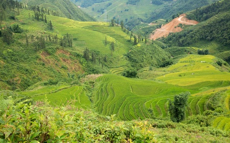 Rice plantation in Sapa photo