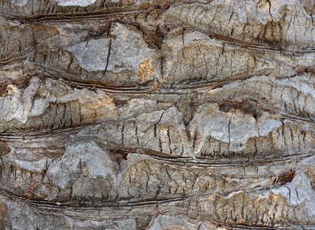 ruggedness: Palm tree