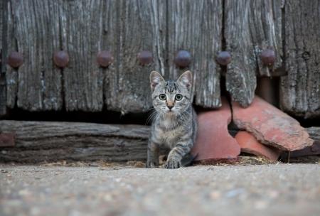 small cat Imagens