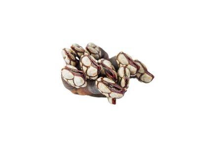 barnacles: oca balani vista dall'alto Archivio Fotografico