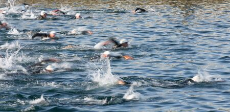 Swimmers in Triathlon, blurred motion of the leaders