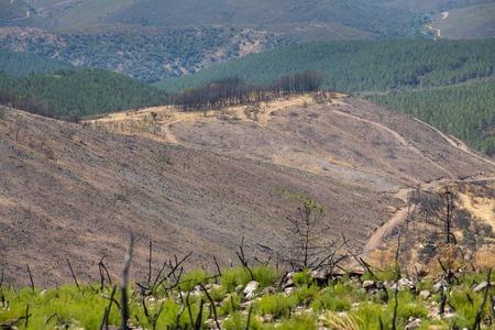 devastated: Devastated forest