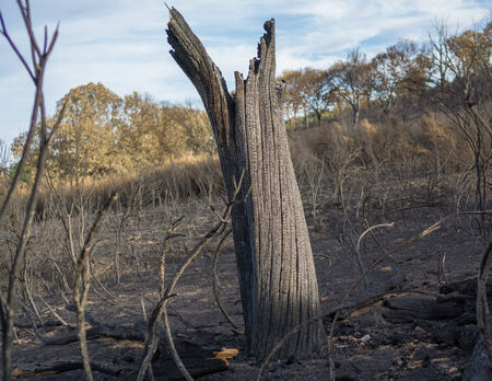 devastated: Tree trunk after the Fire Stock Photo
