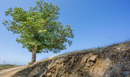 chestnut tree: Chestnut tree and track Stock Photo