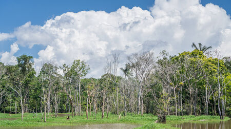 amazon forest: Amazon forest and black river Stock Photo