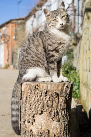 front view: Cat over log, front view